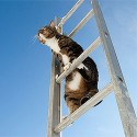 Climbing BEYOND the 2nd Rung Of The Ladder to Success