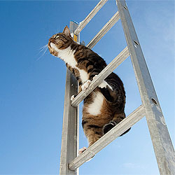 Climbing BEYOND the 2nd Rung Of The Ladder to Success image